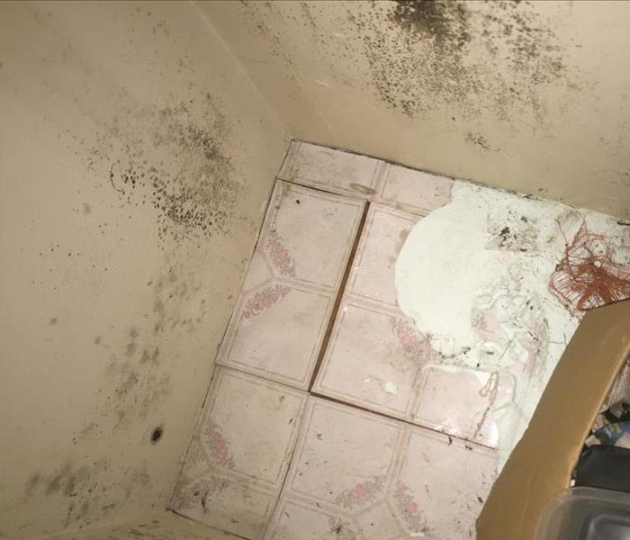 Mold Remediation Mold?  Follow These Mold Safety Tips If You Suspect Mold